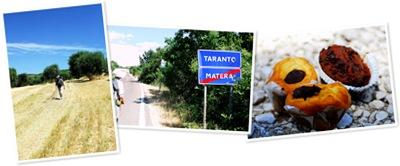 View Matera to Taranto